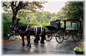 pic5-horses